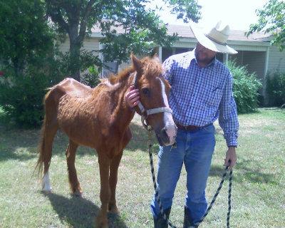 horse_willie01